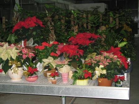 Floricoltura montanari vivaio ravenna piante fiori orto for Vendita piante orto